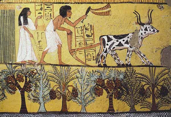 کار کشاورزی